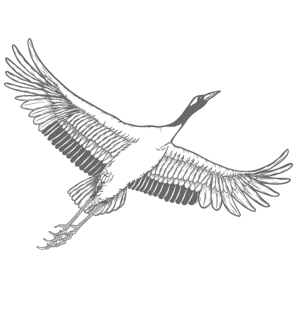 鶴 | 天地を繋ぐ | 一生同じ番い | ゾコゾデザインの企業メッセージ