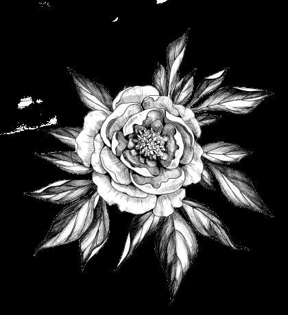 牡丹 | 百花の王 | 幾重にも纏う気品 | ゾコゾデザインの企業メッセージ
